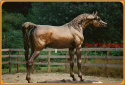 Sire of significance -Koronec